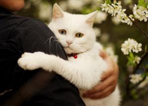 Признаки для кастрации кота