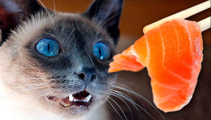 food-cat-2