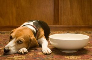 Pancreatitis is a painful condition that usually affects middle-aged or elderly dogs. Symptoms include abdominal pain and vomiting. Learn more here.